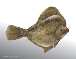Flatfish vector illustration by ganzart