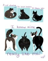My Affectionate Cats by Akogare