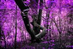 Dream Forest by Swaptrick