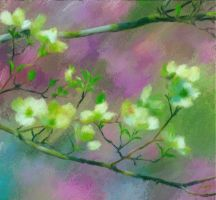 Dogwood by fmr0