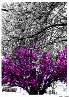 pUrple by chriskronen