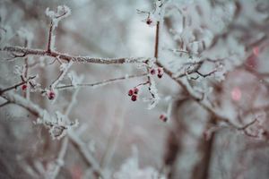 Snow by Blanchii