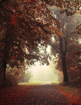 Autumn Leaves by cs4pro