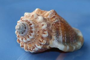 Sea shell Stock 042 by Malleni-Stock