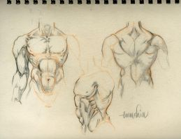 Torso Sketches by emmshin