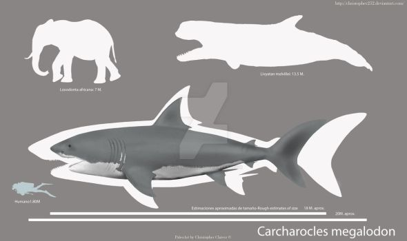 Carcharocles megalodon by Christopher252