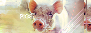Pigs tag by ar-p