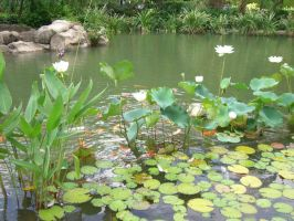 lily pads 1.2 by meihua-stock