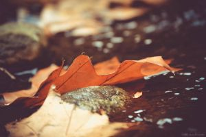 Autumn Leaves by WickedOwl514