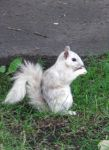 White Squirrel by BeauW