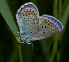 blue butterfly by katerina-m