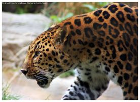 Amur Leopard 024 by ShineOverShadow