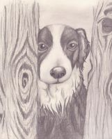 Border Collie by LyonsGate