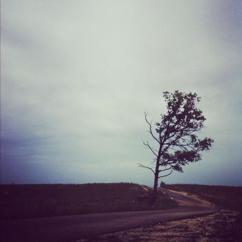 Lonely tree by darkshines7