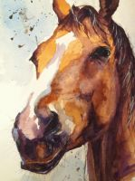 Horse watercolour by sarahstokes