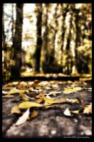 Autumn Leaves by PortraitOfaLife