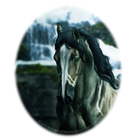 Boreous by CoutureEquineDesigns