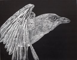 Bird Scratchboard by MrJuniorer