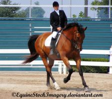 Trakehner 5 by EquineStockImagery