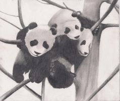 Pandas by SUMDIFF