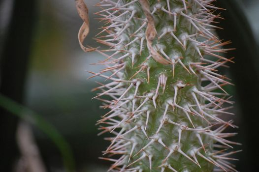 cactus by MLeighS