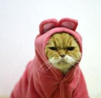 ANGRY KITTY ANGRY by MellowPanda
