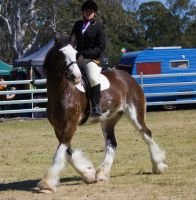STOCK Canungra Show 2013-232 by fillyrox