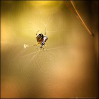 autumn forest: spiders I by amsterdam-jazz