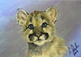 ACEO Cougar Kitten by annieoakley64
