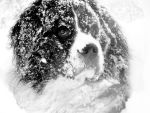 Rocky in the snow by HelaLe