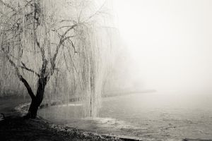 December weeping by andrea-ioana