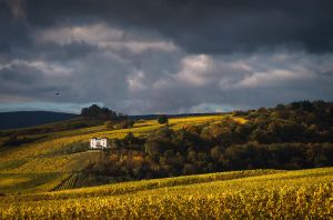Autumn Wine by aw-landscapes