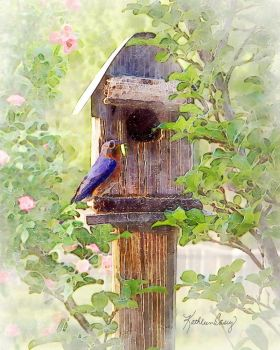 Bluebird House by KathleenCasey