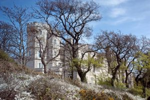 castle in the trees by smevstock