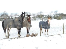 Rocky and friends in the snow by ponychops