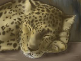 The Leopard by Sadir89