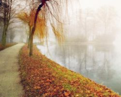 foggy river by rose-petals