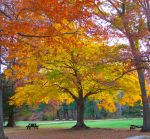 When Autumn Leaves Are Falling by WilliamJCovello
