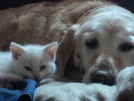 My kitten and dog! by PlungedintoLight7
