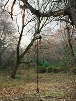 Chain hanging from a tree by seeker-of-revelation