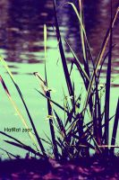 . Grass and Flowers . by HatRat