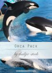 pack - 005 Orcas by thalija-STOCK