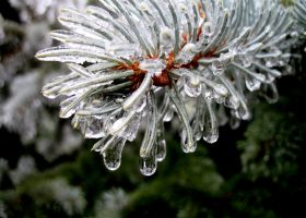 Frozen Pine Branch by paintintheneck