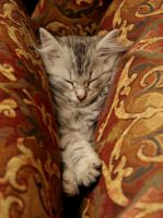 Sleeping Kitten no. 2 by Mischi3vo