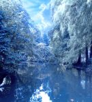 Winter pond by Vidom