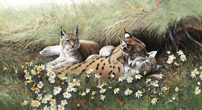 Lynx family by Renum63