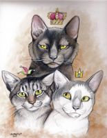 The King, Price and Jester by NatsumeWolf