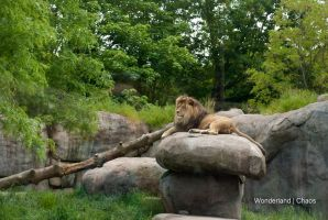 King of the Rock by Evanescent-Chaos
