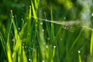 Spider 18-06-2009 by Amersill