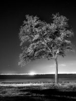 Tree on the Water by MasterMindPhotos